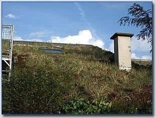 Wohnhaus in Dietzenbach-Steinberg Gründachsanierung